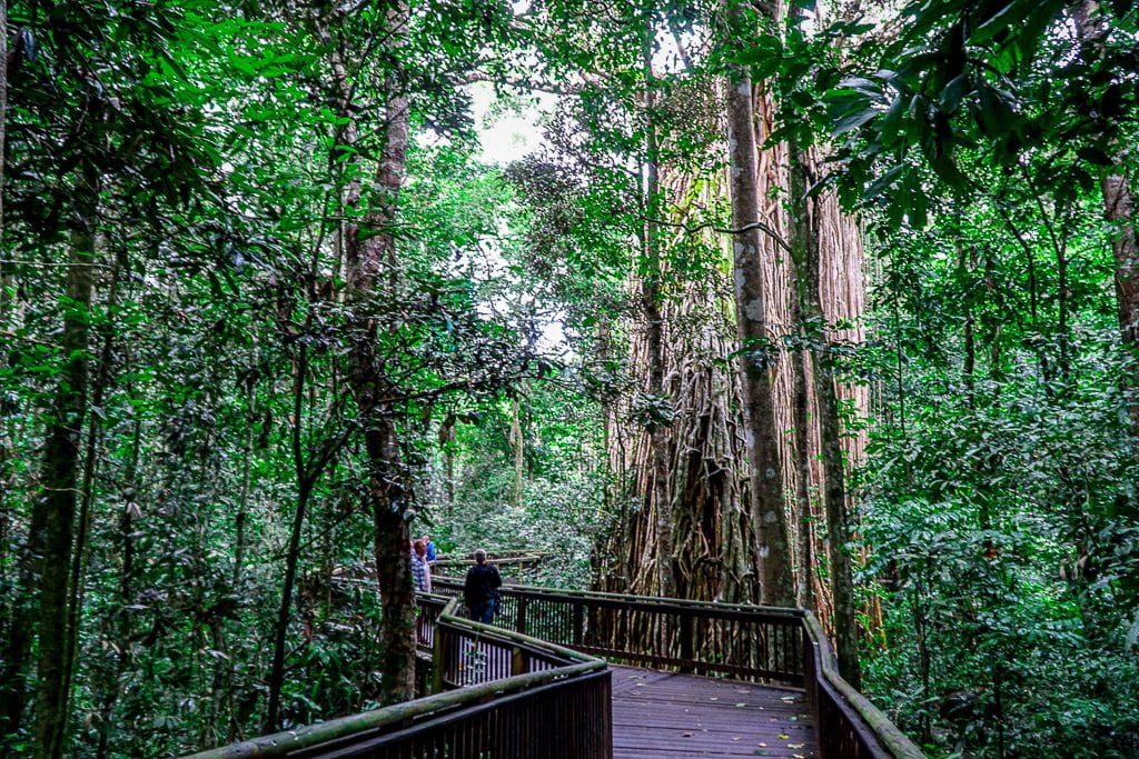 Travel Guide to Cairns