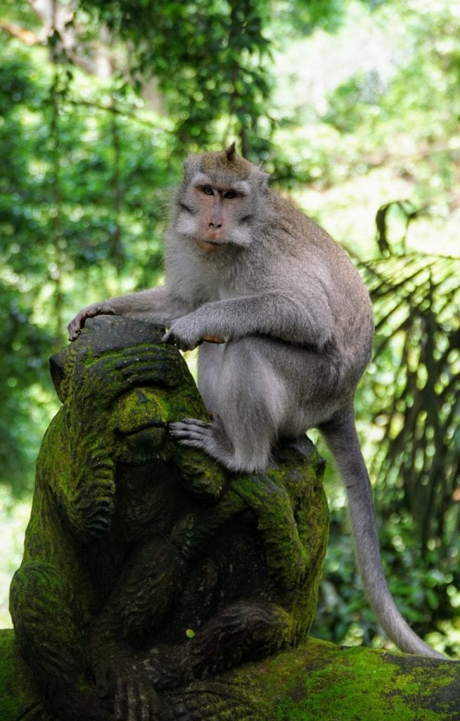 How to use your Sony a6000 - Monkeys at Ubud