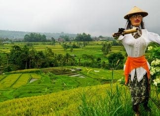 5 day trips for first time Bali Visitors