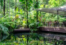 Daintree Ecolodge